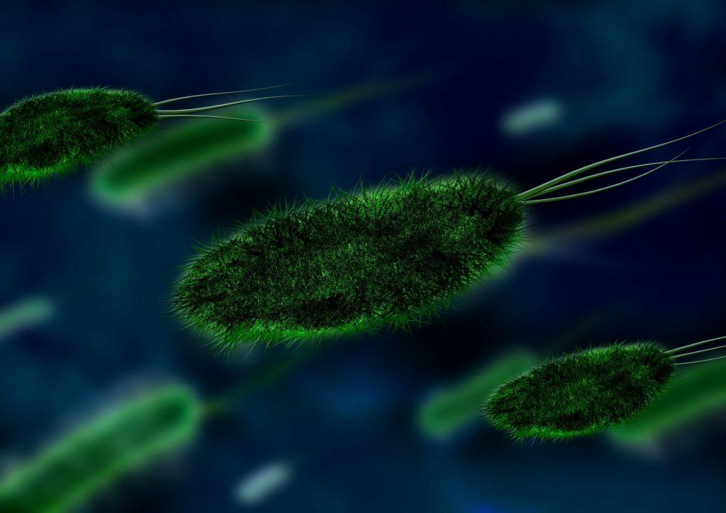 細菌のイメージ