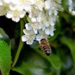 ミツバチのイメージ