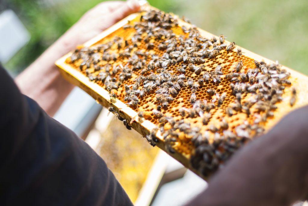 養蜂のイメージ