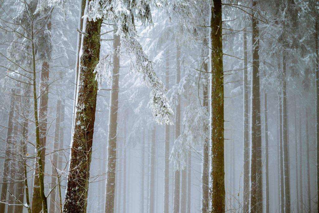 冬の森のイメージ