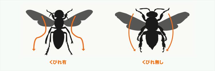 危険なハチの見分け方