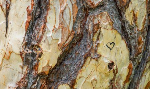 樹皮のイメージ