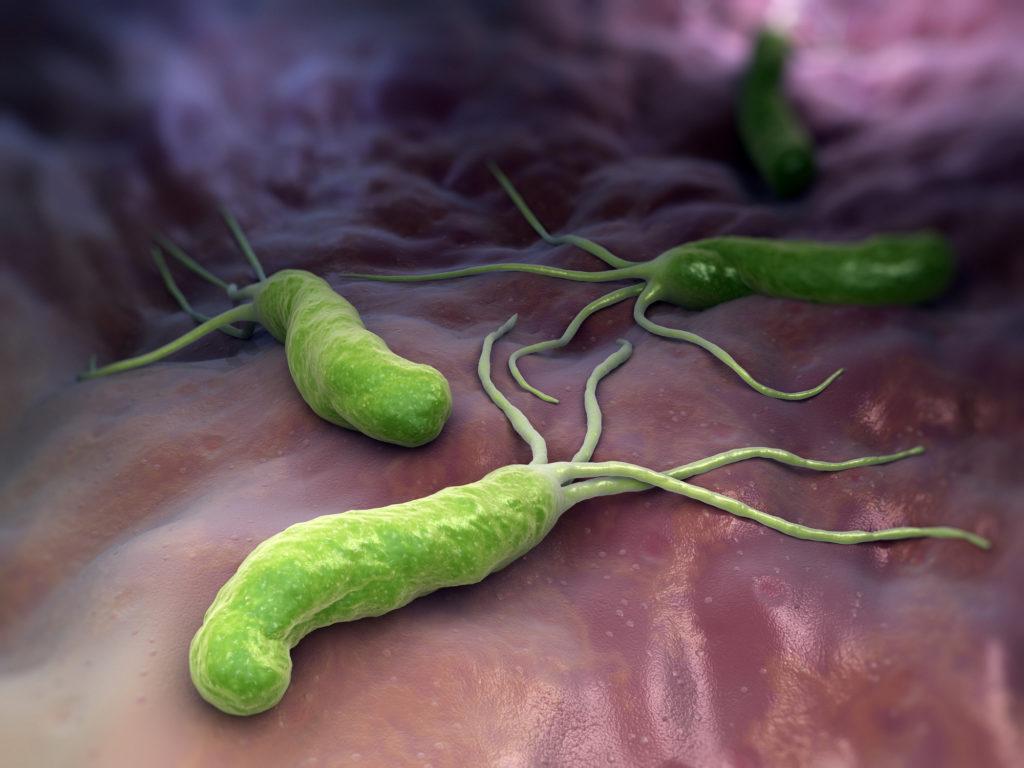 ピロリ菌のイメージ