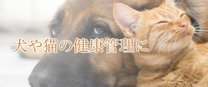 犬と猫のイメージバナー