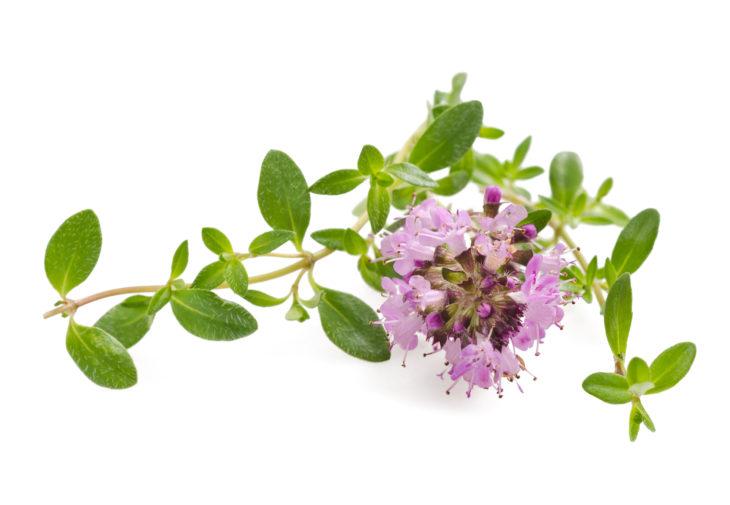 タイムの花と葉