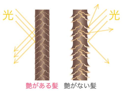 髪の艶 イメージ図
