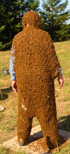 全身びっしりのミツバチ