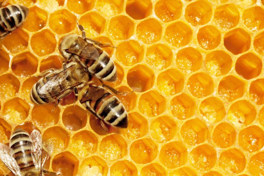 ハチの巣の六角形