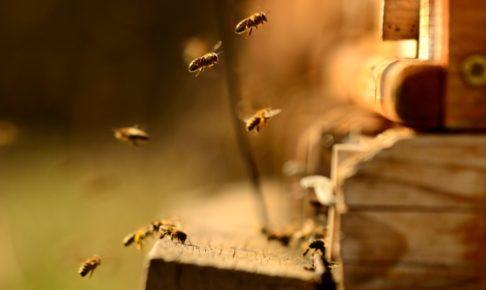 ミツバチの巣のイメージ