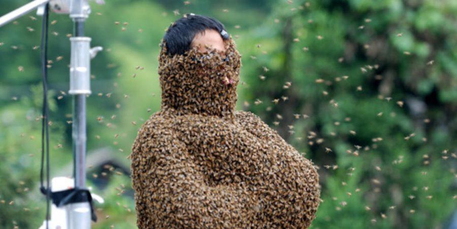 頭頂部以外はミツバチでびっしりな人
