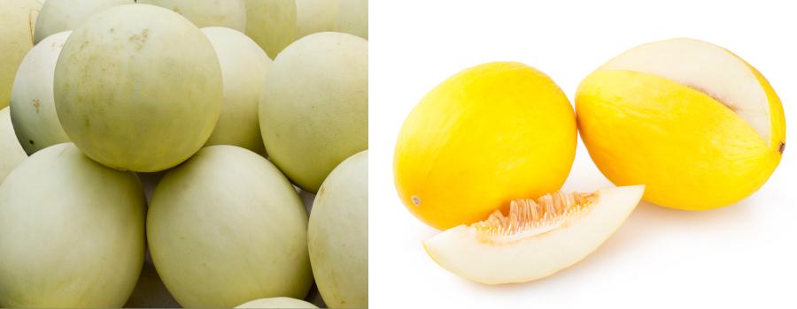 緑と黄色のハネジューメロン