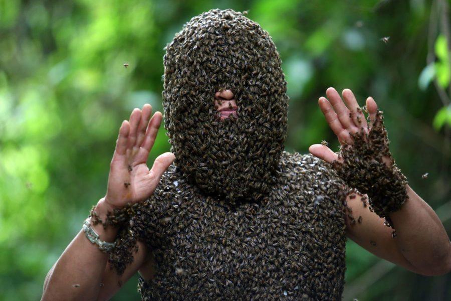 森の中でミツバチを纏う人