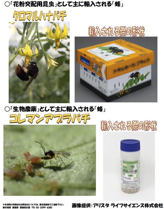 輸入されるハチの似姿
