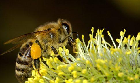 ハチのアップ写真