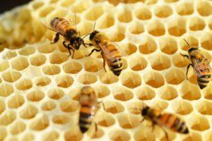 巣の中でぶつかるミツバチのイメージ