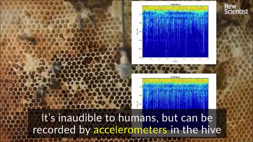 ハチが出す音の動画字幕(解説2)