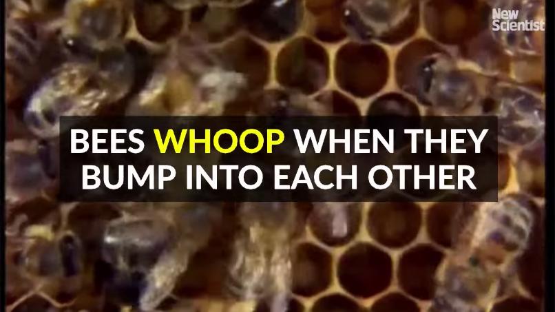 ハチが出す音の動画字幕(タイトル)