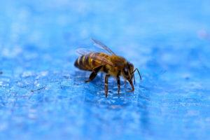 ミツバチと水